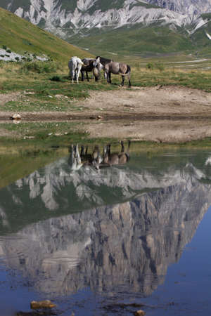 Reflects of the horses in the mountain lake
