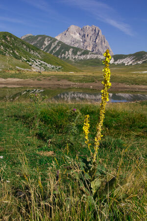 Image of yellow flowers in the abruzzo landscape