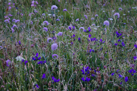 appennino: Carpet of summer flowers in the mountain