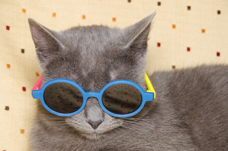 Cool cat with sunglasses
