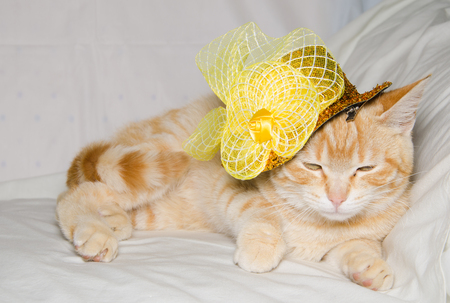 tendencies: Cat wearing yellow hat lying on white Stock Photo