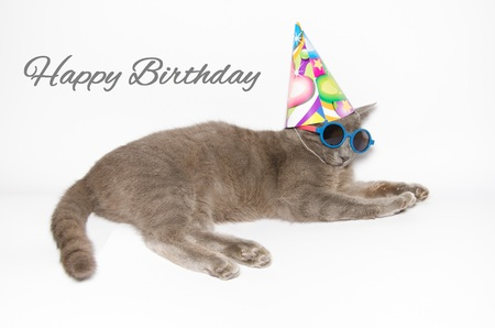 Happy birthday card with funny cat wearing sunglasses and party hat Stock Photo