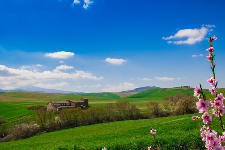 val d'orcia: Val d Orcia landscape in the spring with pink flowers