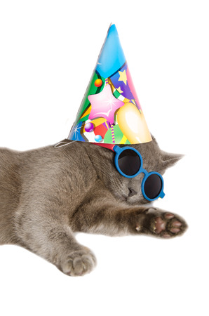 lop eared: Cat with birthday hat and sunglasses isolated on white background