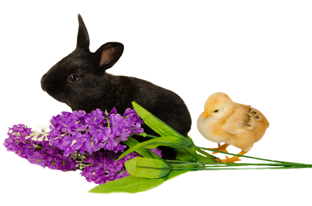 ry: BLack bunny and chick on flowers Stock Photo