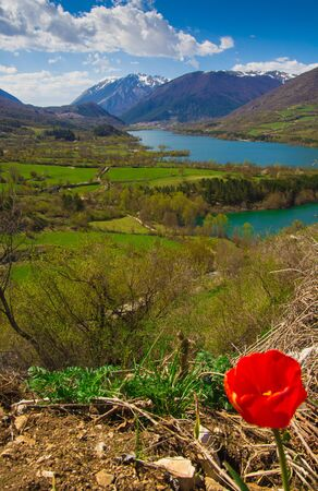 abruzzo: Red flower in the Barrea lake, Abruzzo Stock Photo