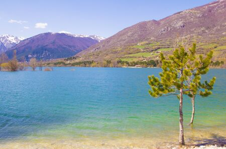 abruzzo: Plants on the barrea lake in Abruzzo