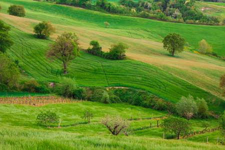 marche: Country landscape near Cingoli in the marche region, Italy