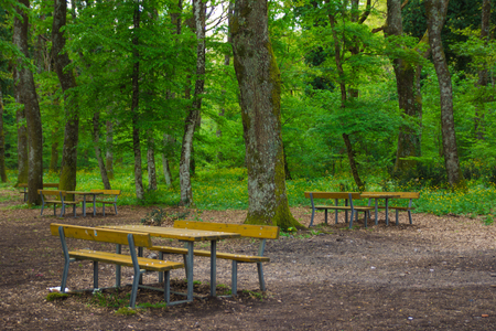 pic nic: Vico lake, Italy, a table for pic-nic in the forest