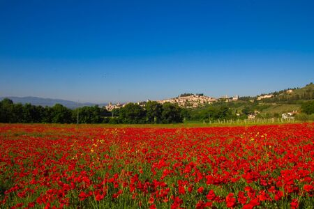 spello: View of Spello from poppies field Stock Photo