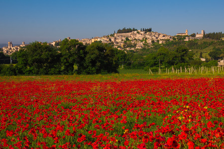 spello: Photo of Spello in Umbria with red poppies field Stock Photo
