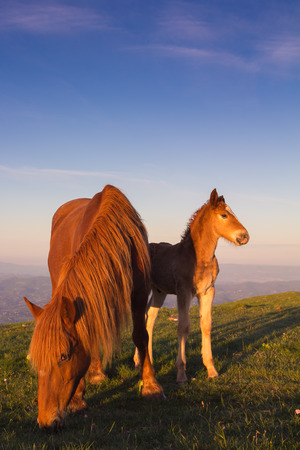 mare: Baby horse and mare Stock Photo