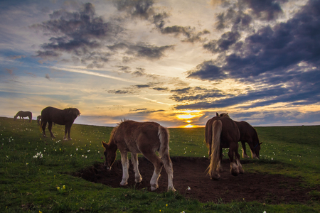 hdr: Wild horses at sunset - HDR