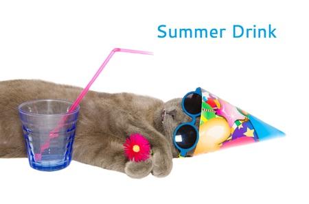 Card of cat taken in summer drink