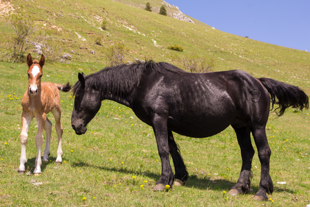 offshoot: Portrait of foal with a mare on a summer pasture Stock Photo
