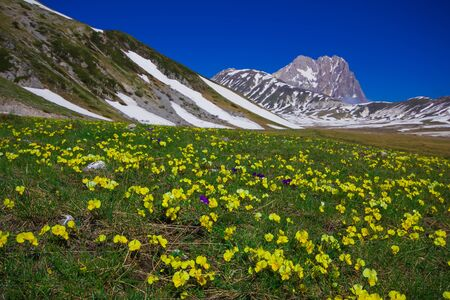 plateau of flowers: Wild flowers at Campo Imperatore plateau in the Apennine Mountains Abruzzo Italy
