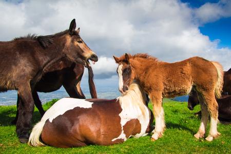 wild donkey: Image of wild horses and donkey