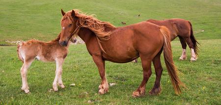 yegua: Yegua con el caballo del beb�