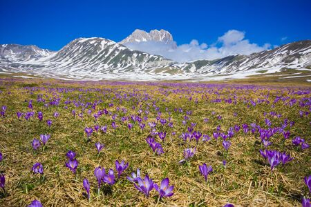 apennines: Image of the plateau of Campo Imperatore with flowers