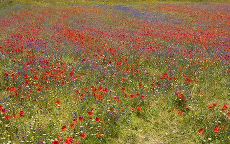 di: Beautiful rural landscape in Castelluccio di Norcia