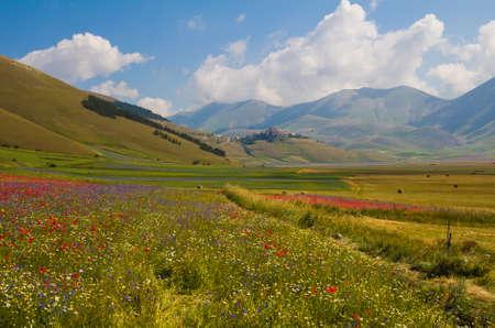 castelluccio: Photo of Castelluccio di Norcia village with flowers in the summer