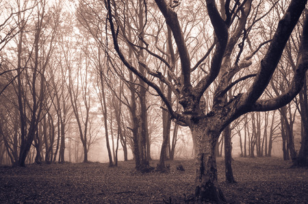 Dark infested forest by ghosts