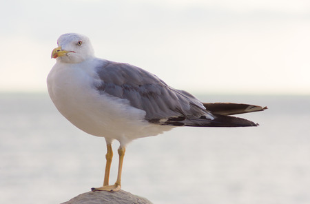 white bird: white bird seagull isolated on the rock Stock Photo
