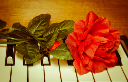 pianoforte: Vintage background  with red rose on piano keyboard