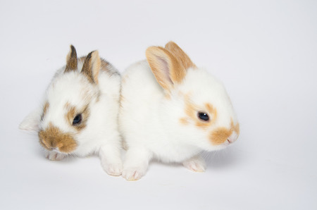 twin sister: Studio portrait of two twin sister bunnies Stock Photo