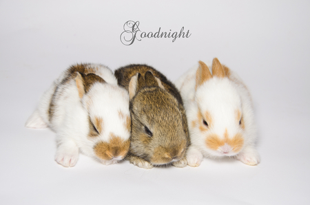 sweet dreams: Card of goodnight and sweet dreams