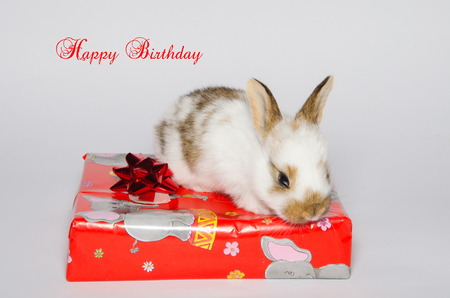 Happy Birthday Card With Bunny Over The Gift Stock Photo Picture