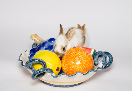 fruits in a basket: Two sweet rabbits on the fruits basket