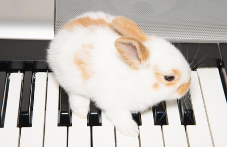 pianista: pianista lindo bebé en el teclado