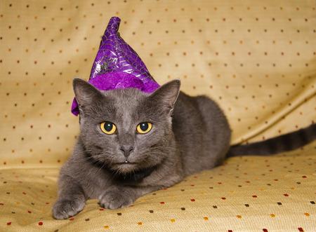 sombrero de mago: Gato curioso con sombrero de mago