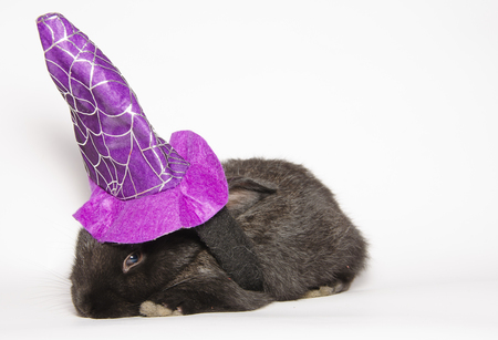 Black baby bunny with halloween witch hat