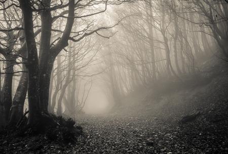 Pad op de gotische bos