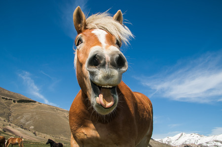 Funny shot of horse with crazy expression