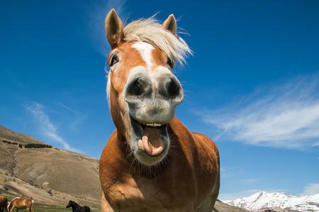 Zabawny strzał konia z szaloną miną