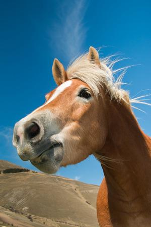 contemporaneous: Portrait of funny horse