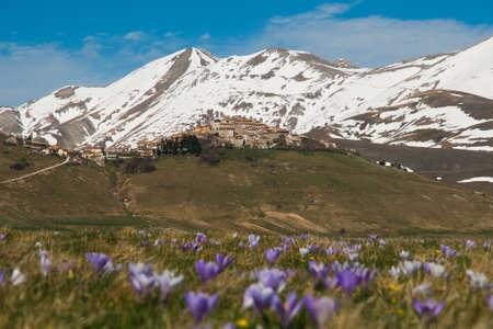 norcia: Castelluccio di Norcia in the spring season with flowers Stock Photo