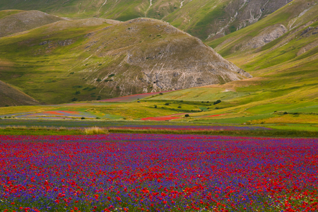 umbria: Umbria summer landscape - Castelluccio di Norcia in Umbria