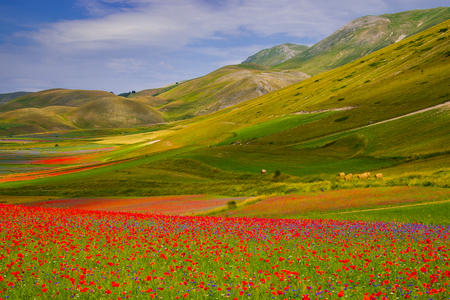 norcia: Symphony of natural colors. The summer flowering of Castelluccio di norcia