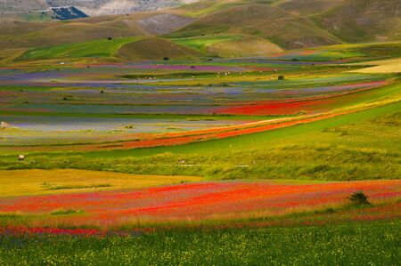 castelluccio di norcia: Castelluccio di Norcia in Umbria during the summer flowering