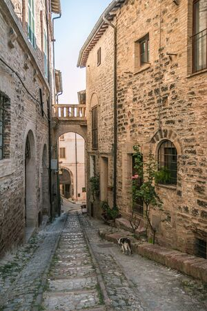 spello: European cat walking on Spello alley Stock Photo