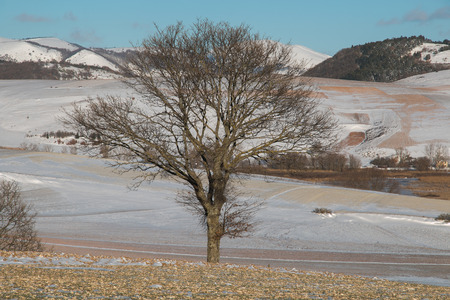 Isolated oak tree in the snow