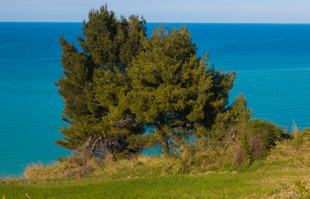 Panoramic view of Monte Conero, two pines on the sea