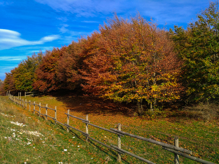 Beautiful autumn landscape with fence and beech trees