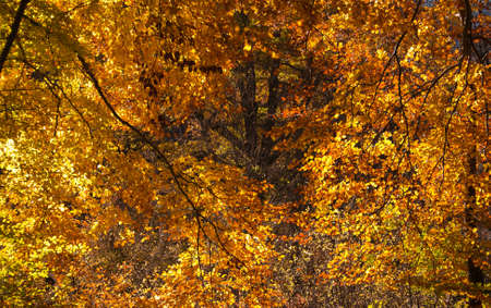 Golden autumn leaves background Stock Photo