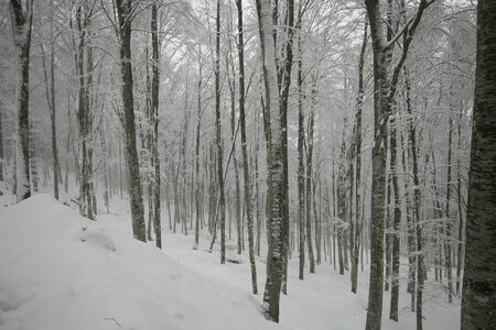 Forest with snow in Tuscany