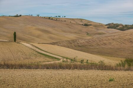 cypresse on a hill near Montalcino in Crete Senesi, Tuscany, Italy